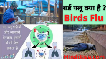 BIRD Flu Kya Hai ? What is Bird flu in Hindi